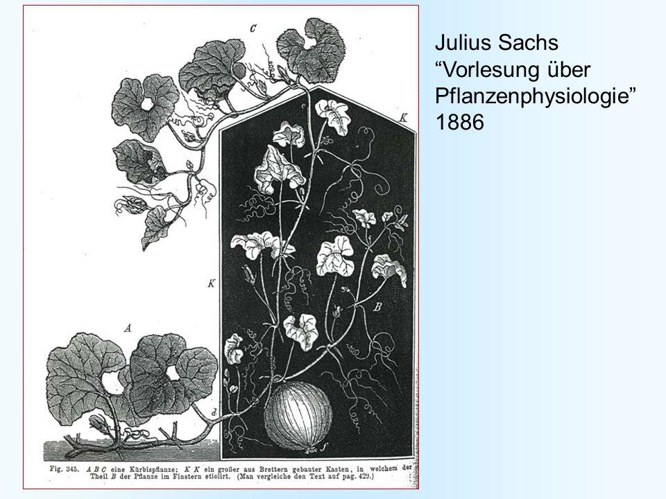 Julius Sachs Vorlesung über Pflanzenphysiologie 1886