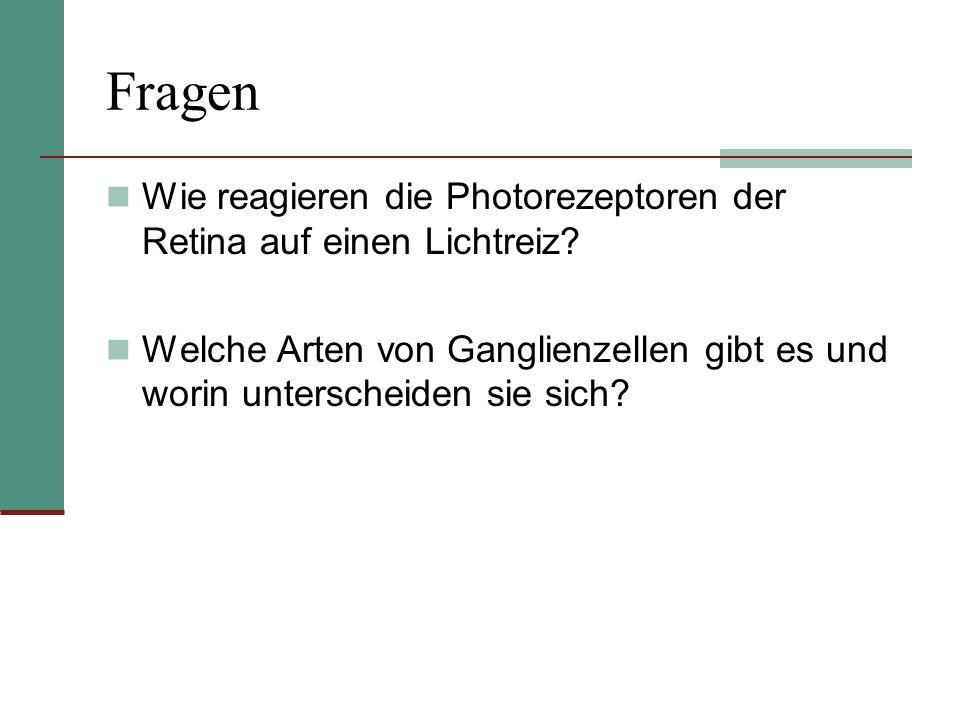 FragenWie reagieren die Photorezeptoren der Retina auf einen Lichtreiz.