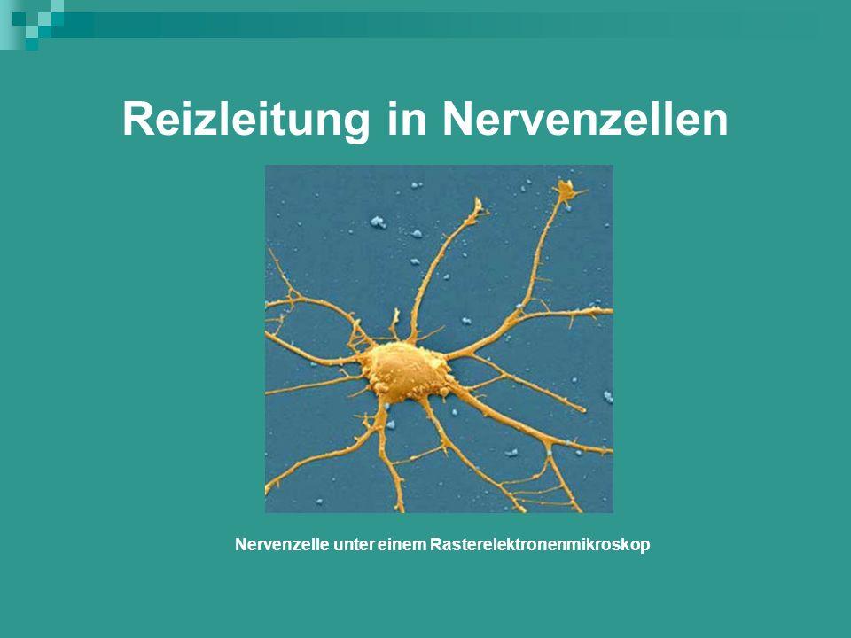 Reizleitung in Nervenzellen