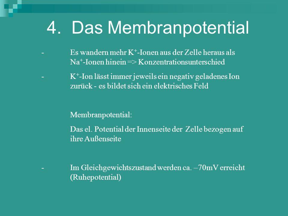 4. Das MembranpotentialEs wandern mehr K+-Ionen aus der Zelle heraus als Na+-Ionen hinein => Konzentrationsunterschied.