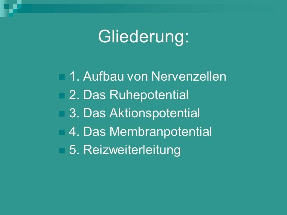 Gliederung: 1. Aufbau von Nervenzellen 2. Das Ruhepotential
