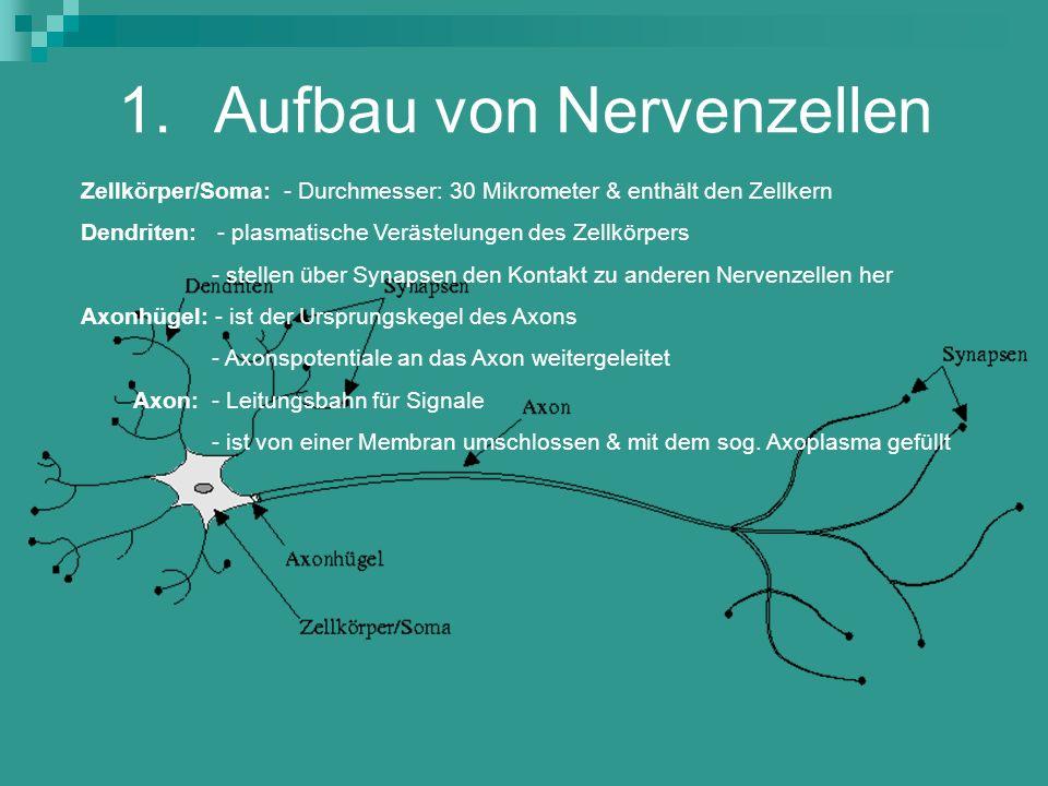 Aufbau von Nervenzellen
