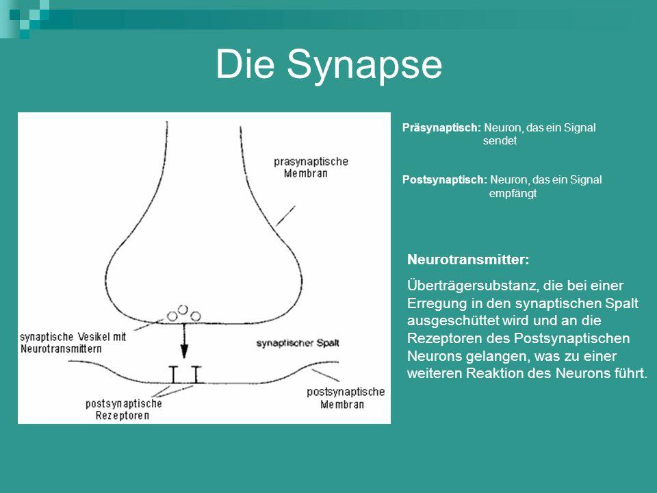 Die Synapse Neurotransmitter: