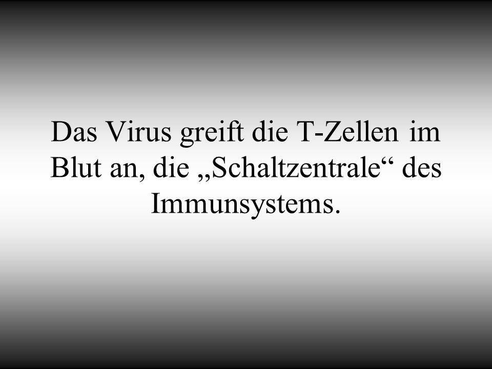 """Das Virus greift die T-Zellen im Blut an, die """"Schaltzentrale des Immunsystems."""