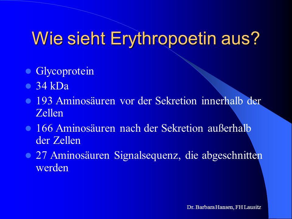 Wie sieht Erythropoetin aus