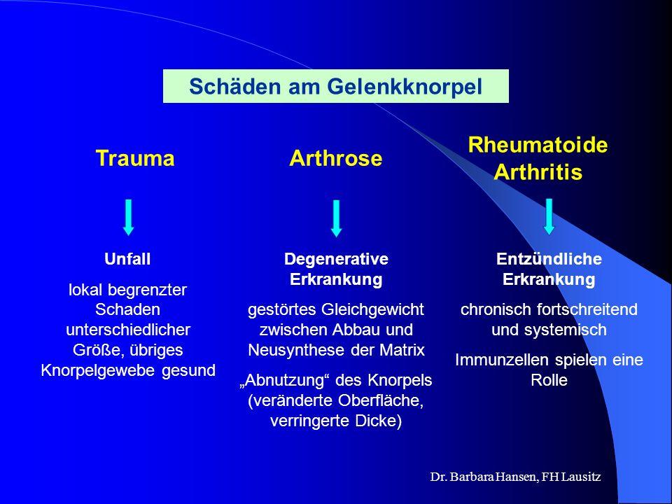 Schäden am Gelenkknorpel Rheumatoide Arthritis Trauma Arthrose