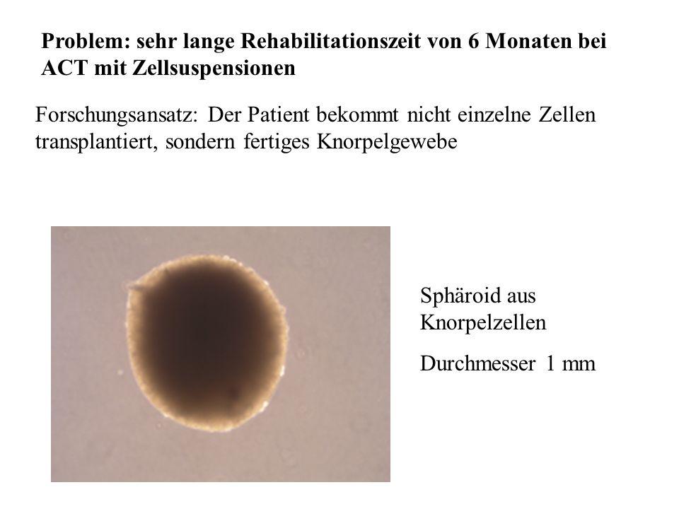 Problem: sehr lange Rehabilitationszeit von 6 Monaten bei ACT mit Zellsuspensionen