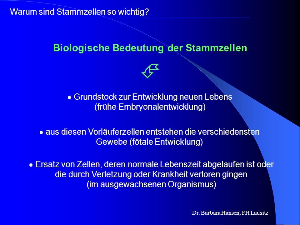 Biologische Bedeutung der Stammzellen