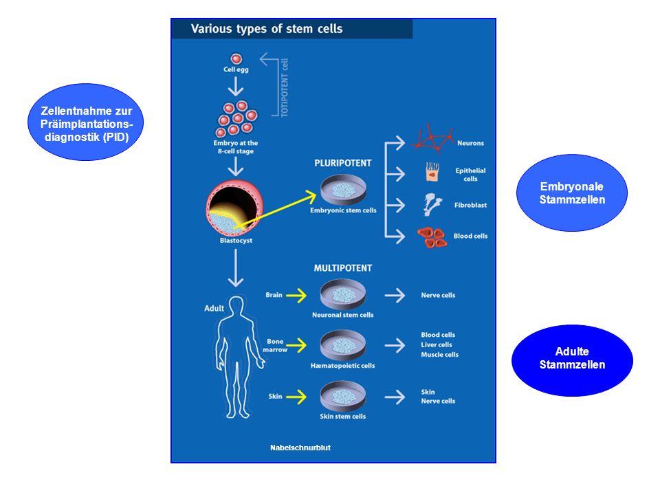 Stammzellen xx Zellentnahme zur Präimplantations-diagnostik (PID)