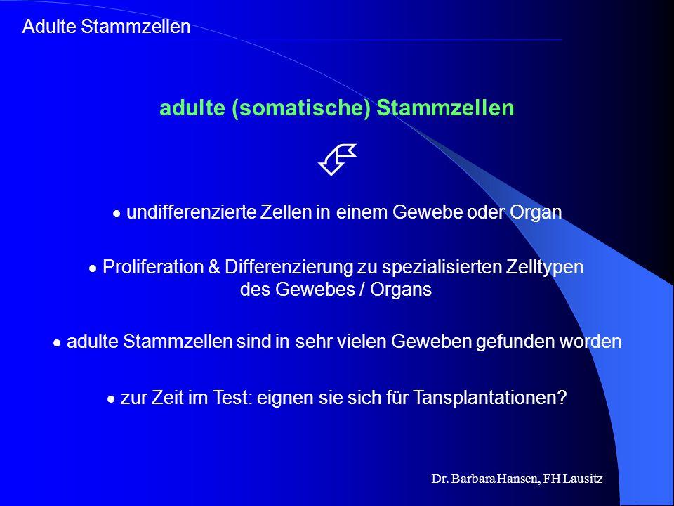 Adulte Stammzellen in Geweben