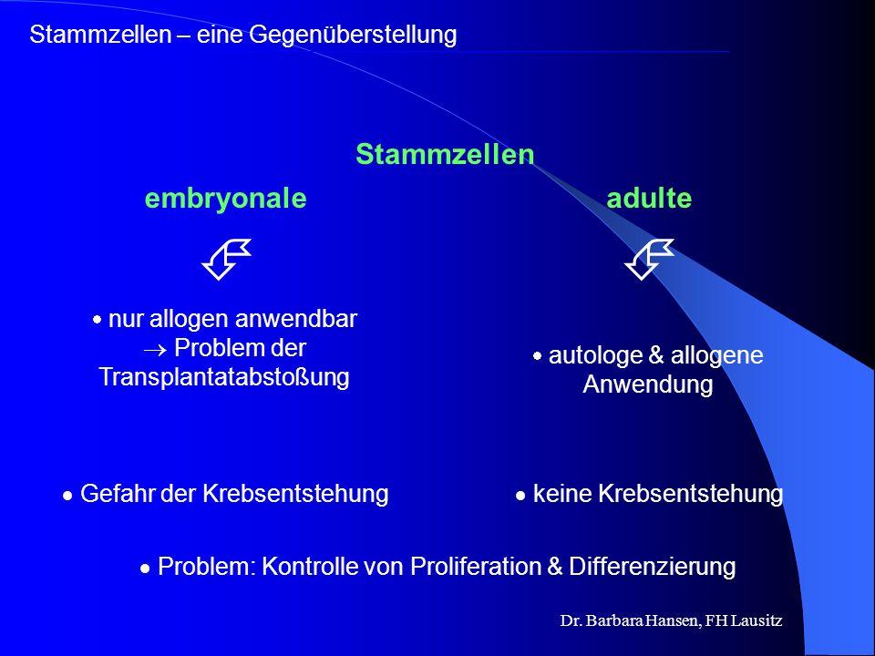   Stammzellen embryonale adulte Stammzellen – eine Gegenüberstellung