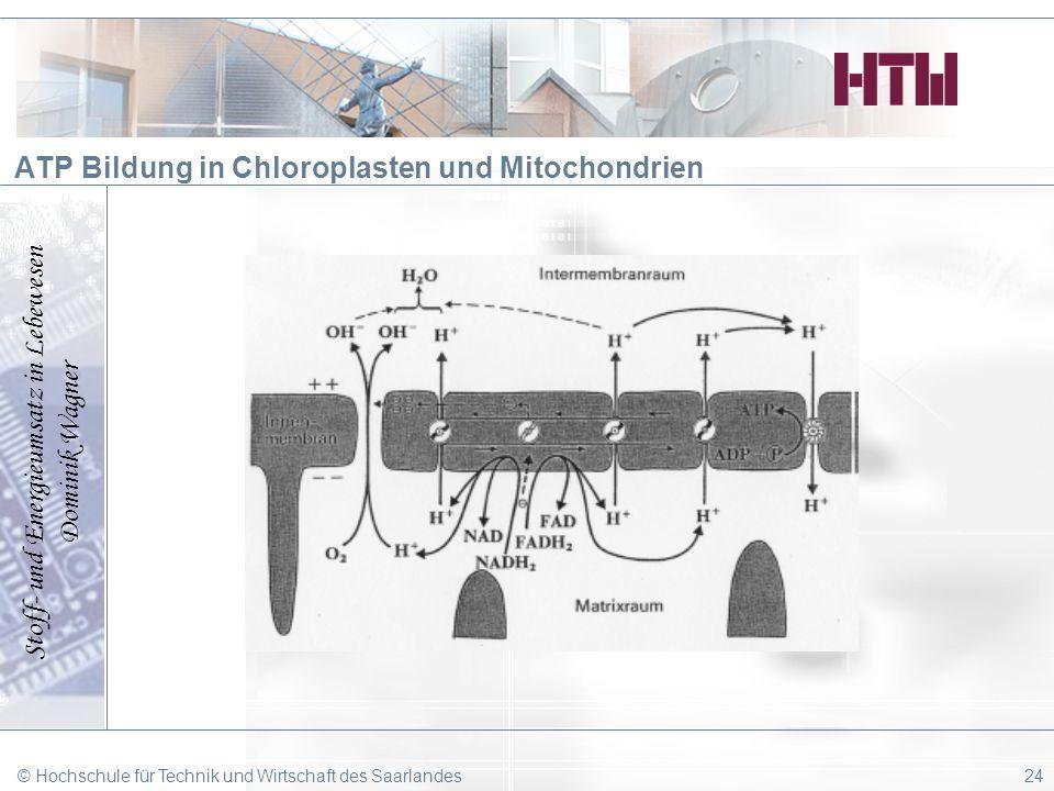 ATP Bildung in Chloroplasten und Mitochondrien