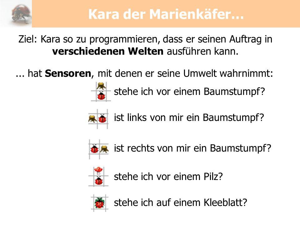 Kara der Marienkäfer… Ziel: Kara so zu programmieren, dass er seinen Auftrag in verschiedenen Welten ausführen kann.