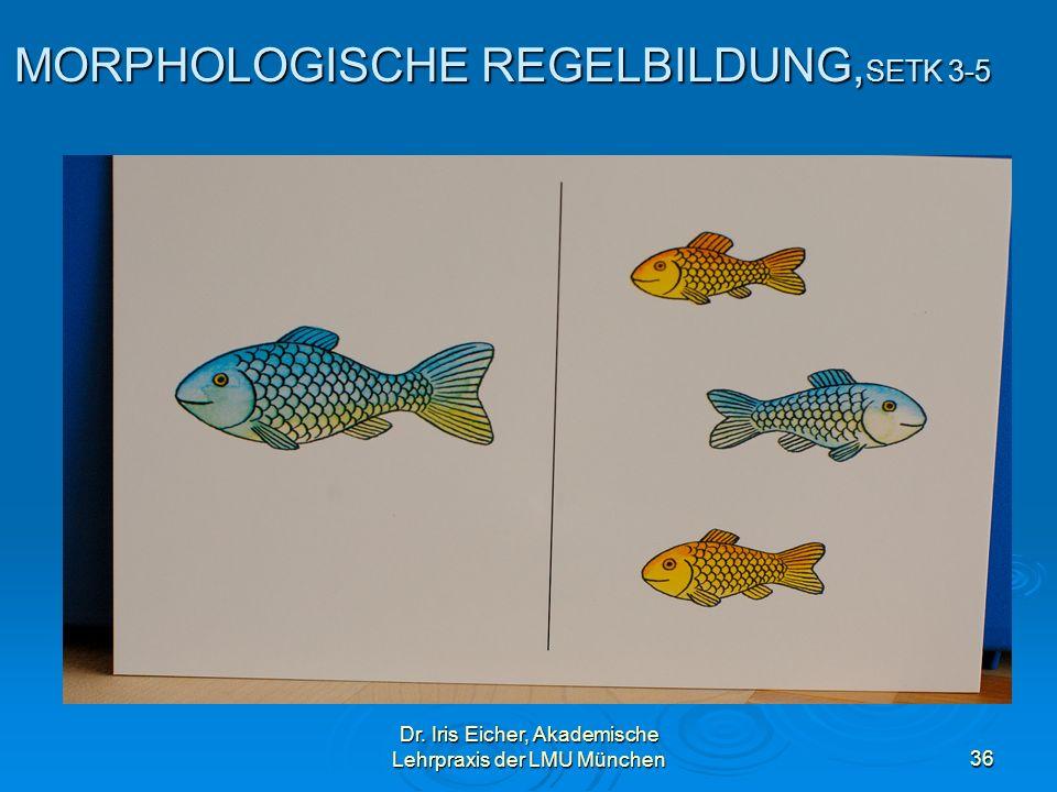 MORPHOLOGISCHE REGELBILDUNG,SETK 3-5