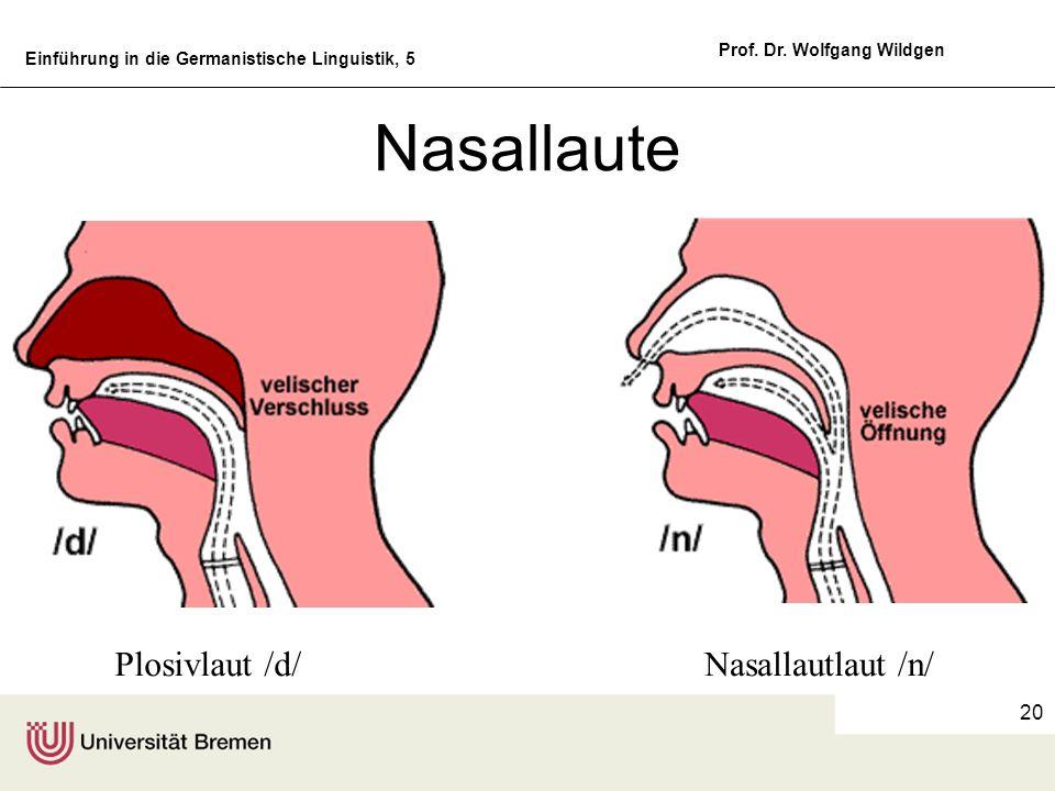 Nasallaute Plosivlaut /d/ Nasallautlaut /n/