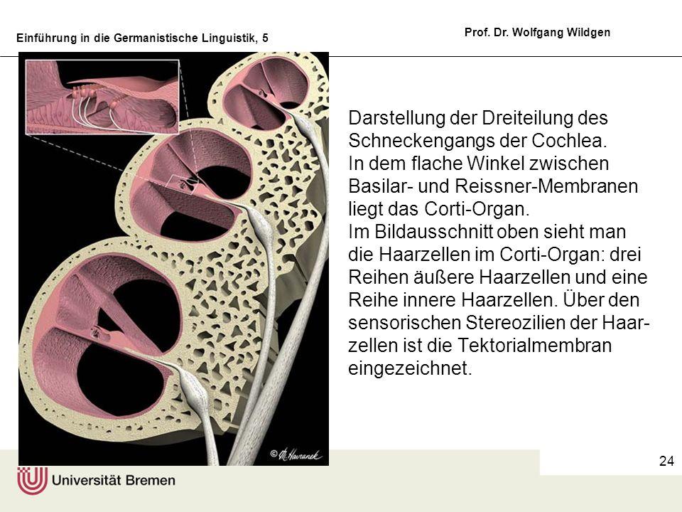 Darstellung der Dreiteilung des Schneckengangs der Cochlea