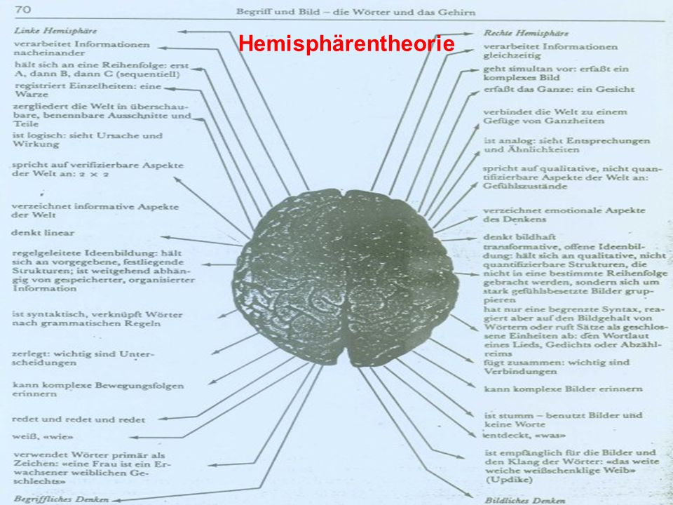 Hemisphärentheorie