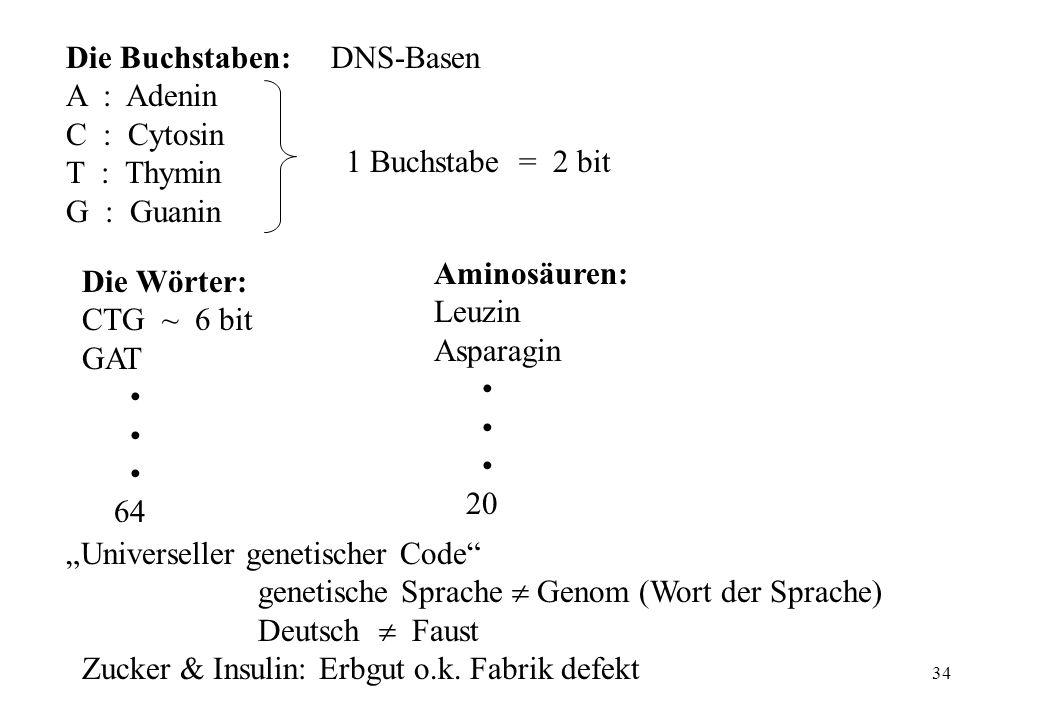 Die Buchstaben: DNS-Basen