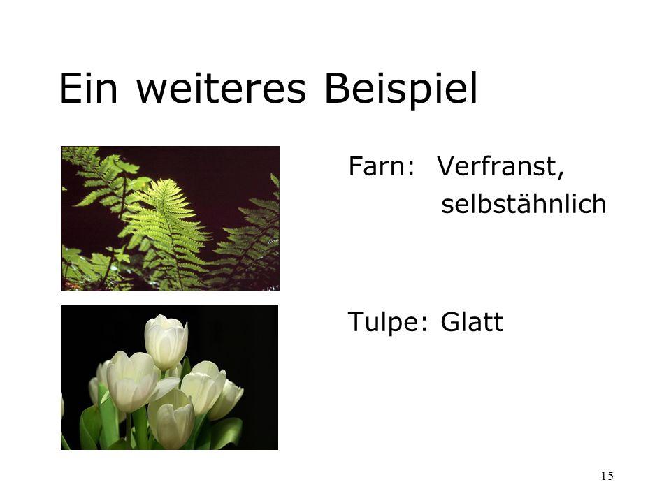 Ein weiteres Beispiel Farn: Verfranst, selbstähnlich Tulpe: Glatt