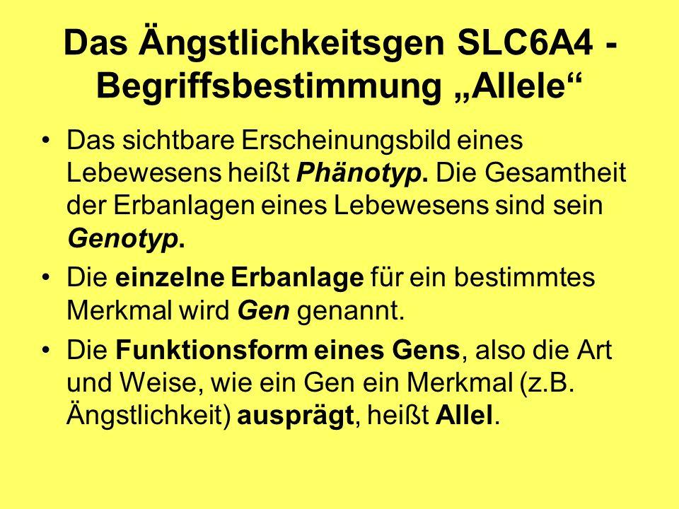 """Das Ängstlichkeitsgen SLC6A4 -Begriffsbestimmung """"Allele"""