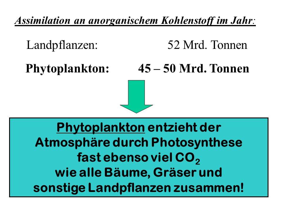Landpflanzen: 52 Mrd. Tonnen
