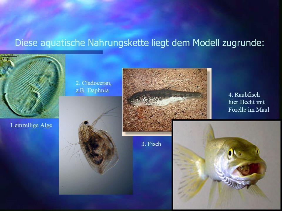 Diese aquatische Nahrungskette liegt dem Modell zugrunde: