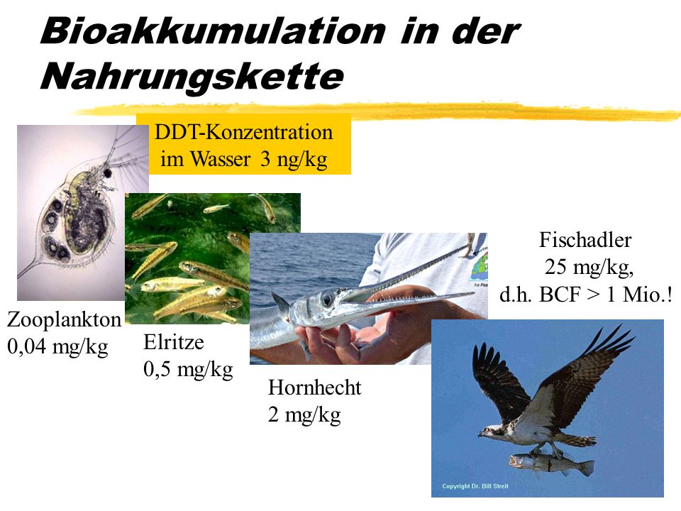 Bioakkumulation in der Nahrungskette