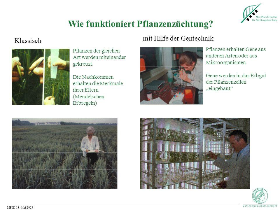 Wie funktioniert Pflanzenzüchtung