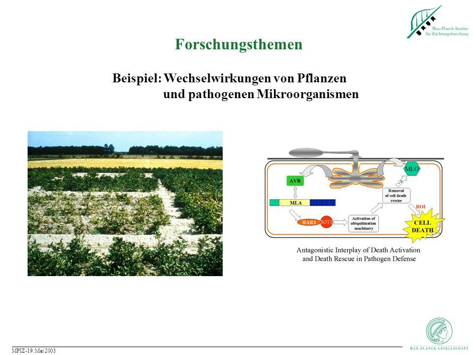 Forschungsthemen Beispiel: Wechselwirkungen von Pflanzen