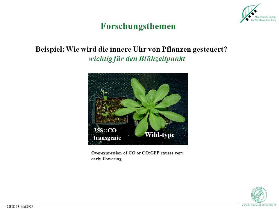 Forschungsthemen Beispiel: Wie wird die innere Uhr von Pflanzen gesteuert wichtig für den Blühzeitpunkt.
