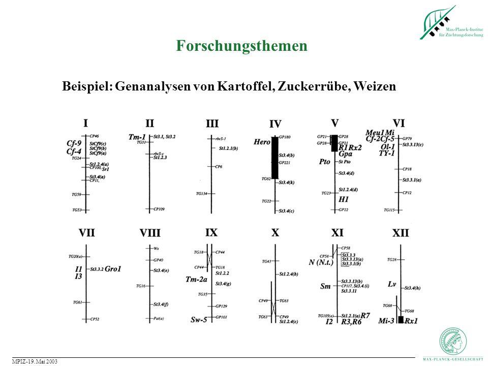 Forschungsthemen Beispiel: Genanalysen von Kartoffel, Zuckerrübe, Weizen MPIZ-19. Mai 2003