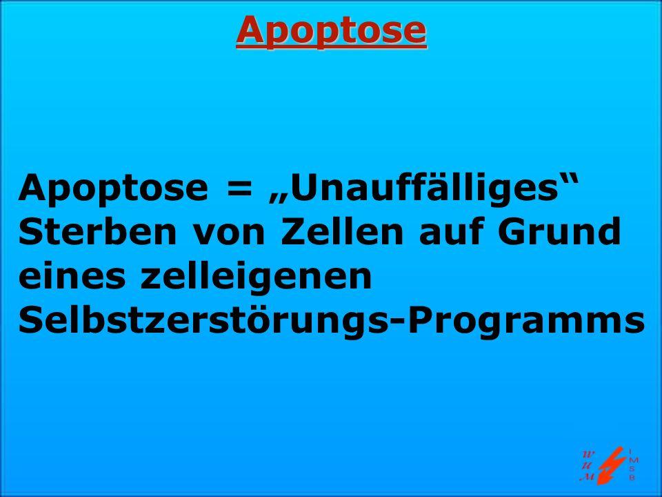 """Apoptose Apoptose = """"Unauffälliges Sterben von Zellen auf Grund eines zelleigenen Selbstzerstörungs-Programms."""
