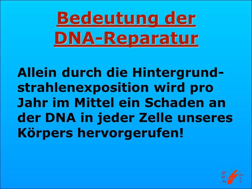 Bedeutung der DNA-Reparatur