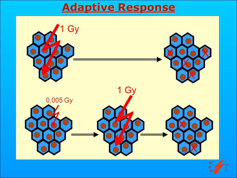 Adaptive Response 1 Gy X X X X 1 Gy 0,005 Gy X X