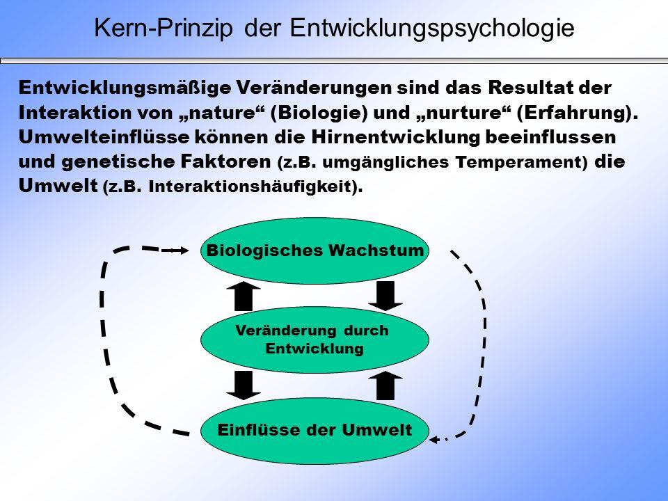 Kern-Prinzip der Entwicklungspsychologie