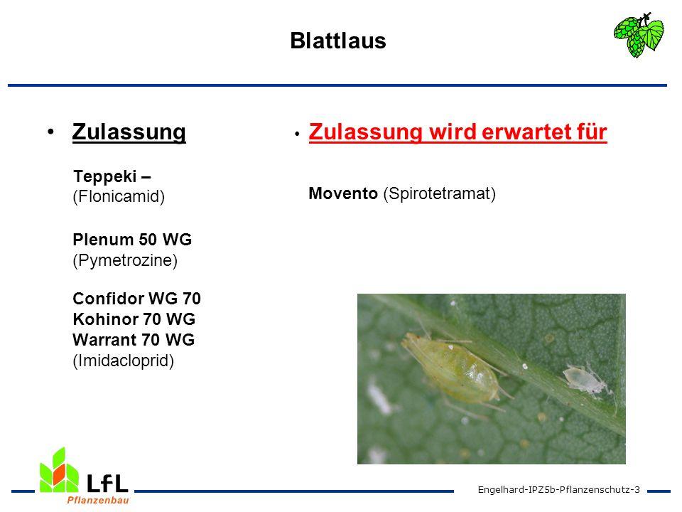 BlattlausZulassung Teppeki – (Flonicamid) Plenum 50 WG (Pymetrozine) Confidor WG 70 Kohinor 70 WG Warrant 70 WG (Imidacloprid)