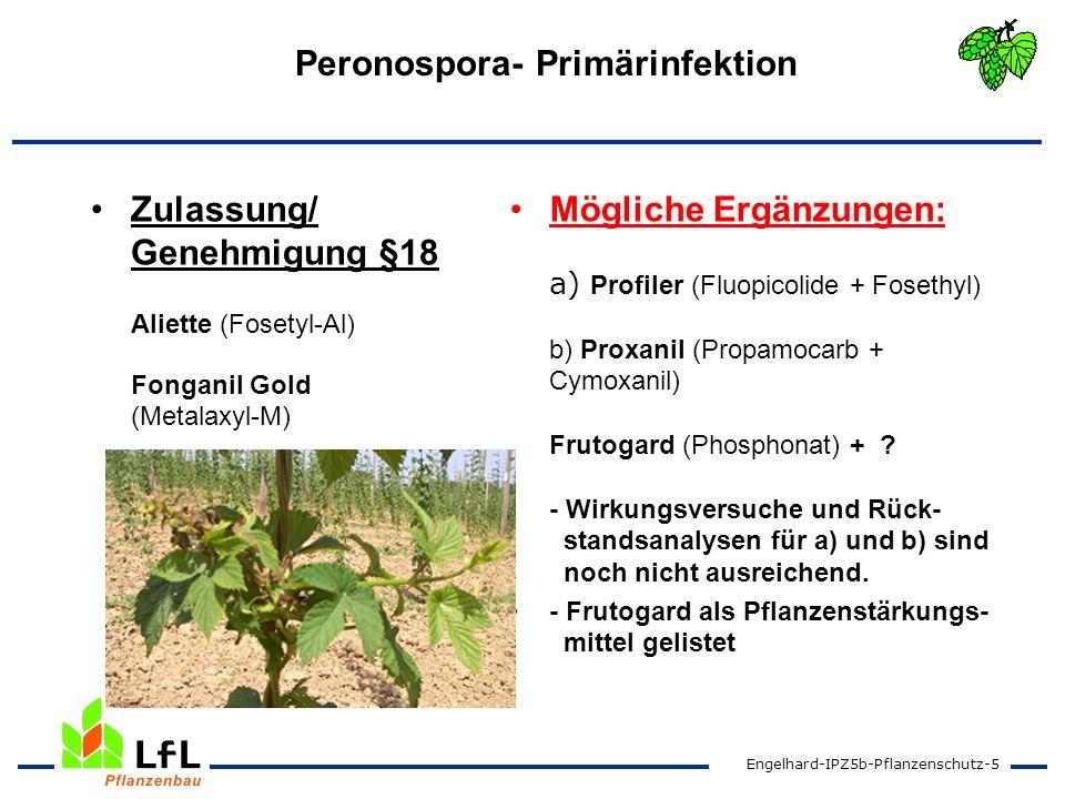 Peronospora- Primärinfektion