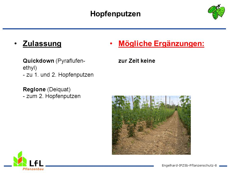 HopfenputzenZulassung Quickdown (Pyraflufen-ethyl) - zu 1. und 2. Hopfenputzen Reglone (Deiquat) - zum 2. Hopfenputzen.