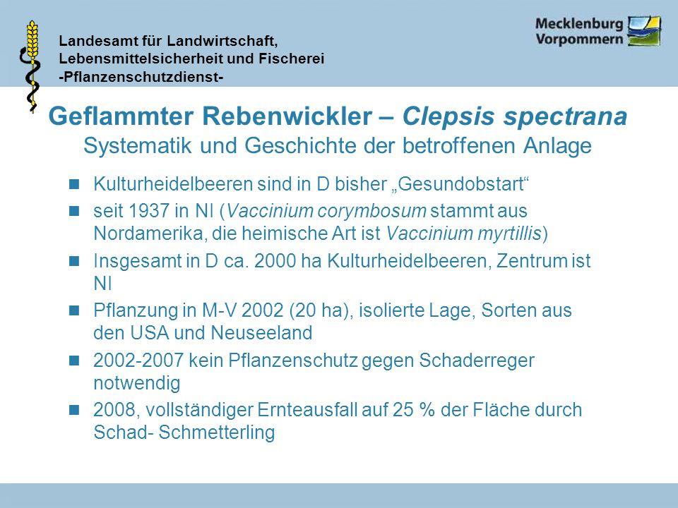 Geflammter Rebenwickler – Clepsis spectrana Systematik und Geschichte der betroffenen Anlage