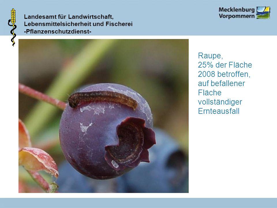 Raupe, 25% der Fläche 2008 betroffen, auf befallener Fläche vollständiger Ernteausfall