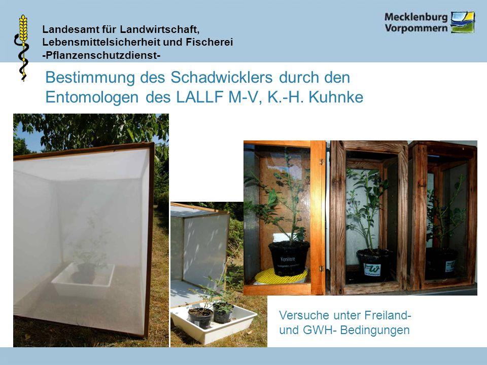 Bestimmung des Schadwicklers durch den Entomologen des LALLF M-V, K.-H. Kuhnke