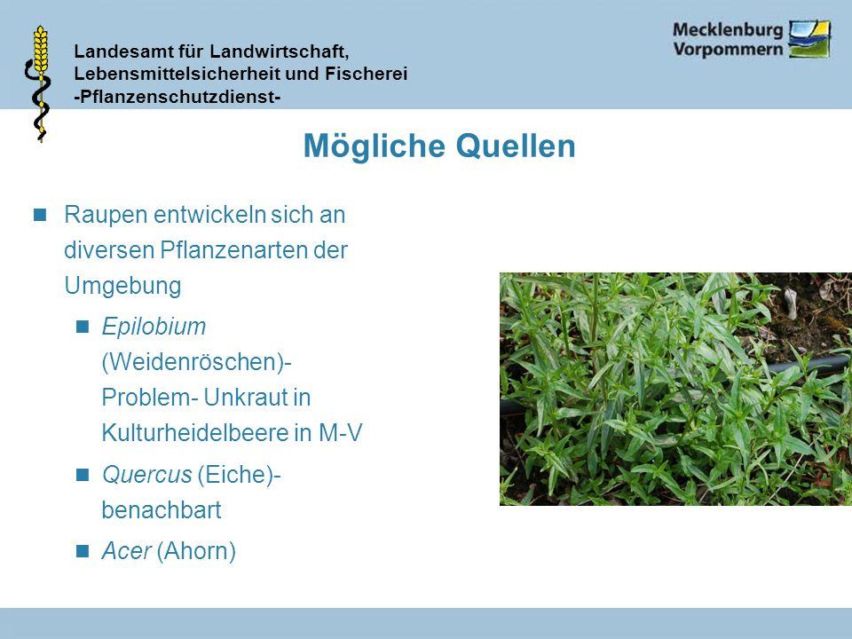 Mögliche Quellen Raupen entwickeln sich an diversen Pflanzenarten der Umgebung.