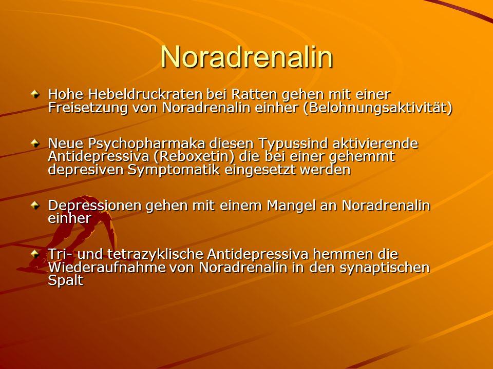 Noradrenalin Hohe Hebeldruckraten bei Ratten gehen mit einer Freisetzung von Noradrenalin einher (Belohnungsaktivität)
