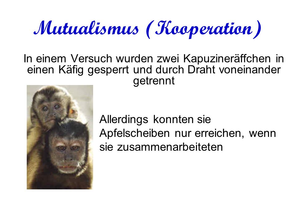 Mutualismus (Kooperation)