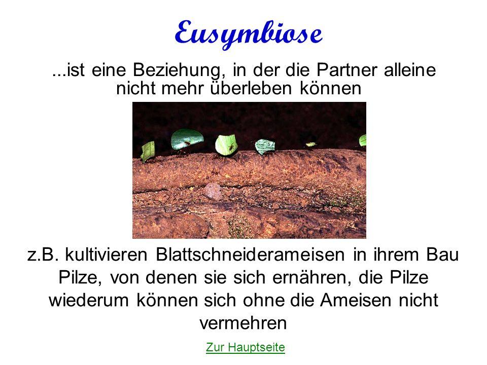 Eusymbiose ...ist eine Beziehung, in der die Partner alleine nicht mehr überleben können.