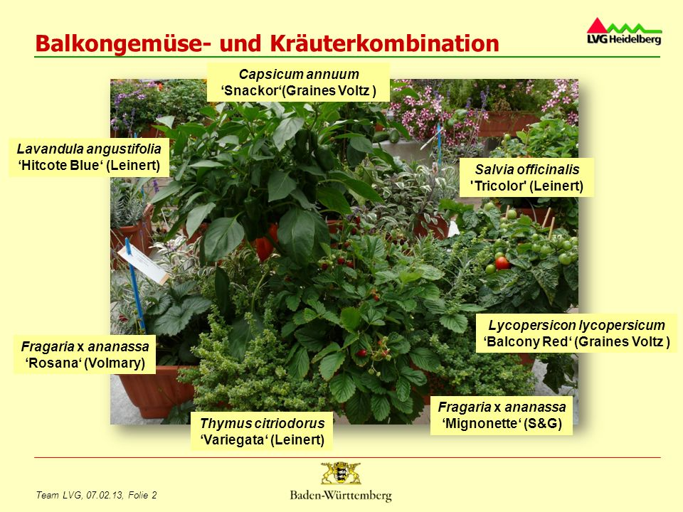 Balkongemüse- und Kräuterkombination