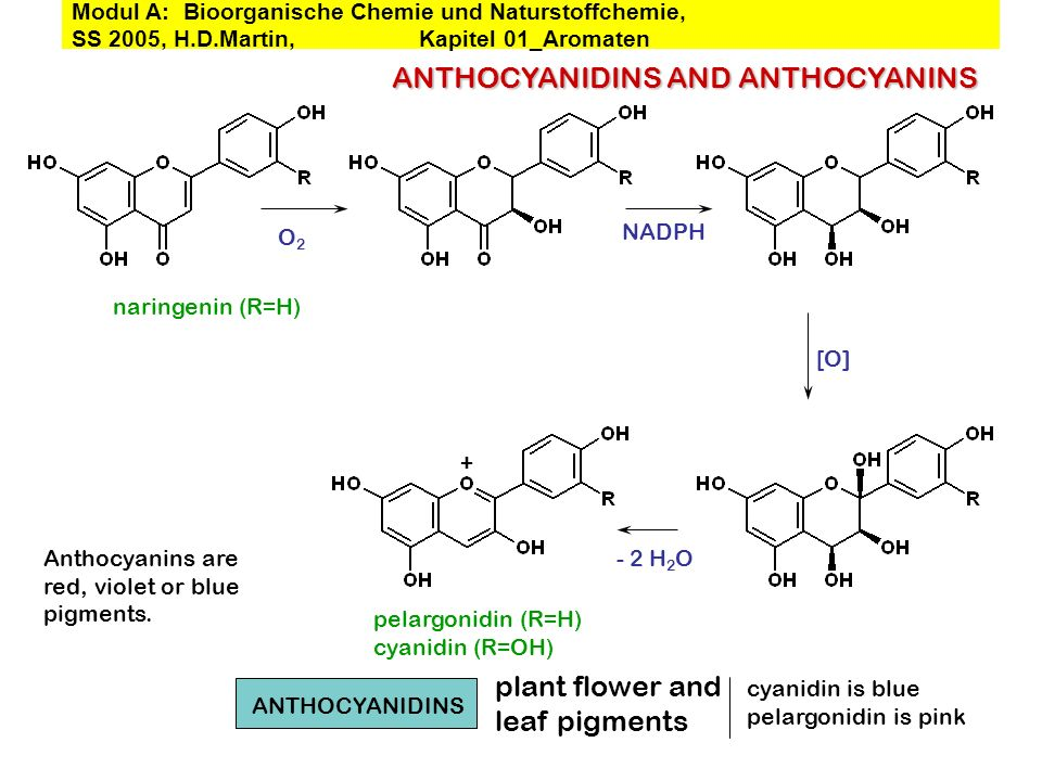 ANTHOCYANIDINS AND ANTHOCYANINS