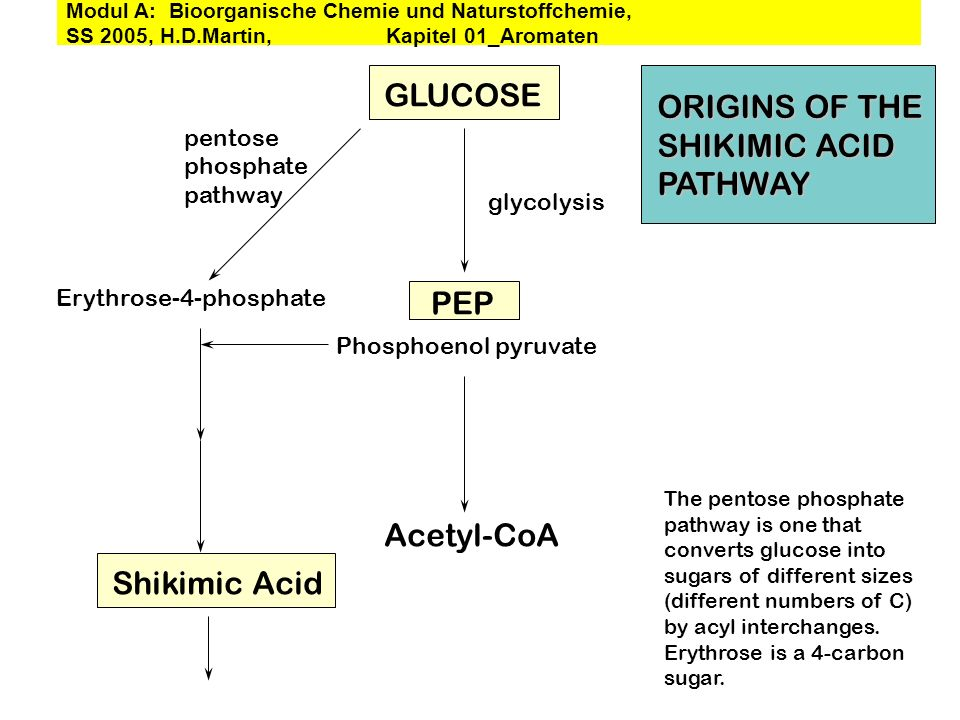 GLUCOSE ORIGINS OF THE SHIKIMIC ACID PATHWAY PEP Acetyl-CoA