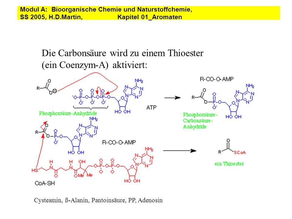 Die Carbonsäure wird zu einem Thioester (ein Coenzym-A) aktiviert: