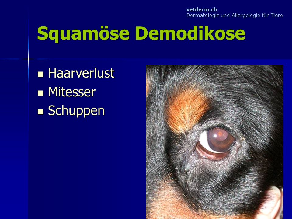 Squamöse Demodikose Haarverlust Mitesser Schuppen